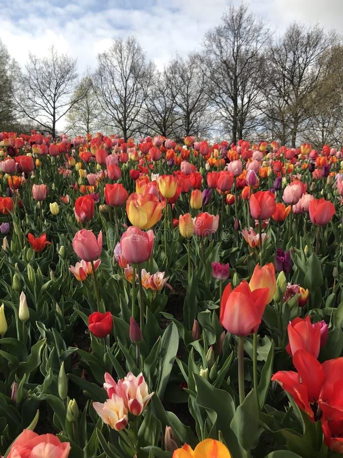 Wszystko o kwiacie fotografia royalty free