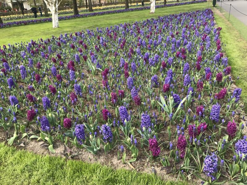 Wszystko o kwiacie obraz royalty free