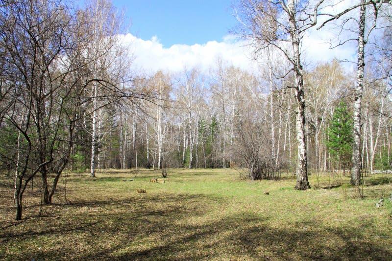 Wszystko well wiosna w lesie zdjęcie royalty free