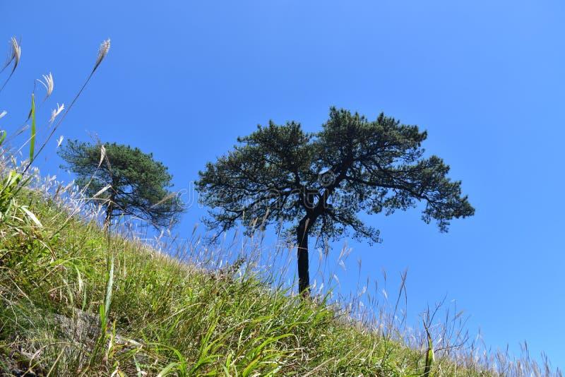 Wugong berg royaltyfria foton
