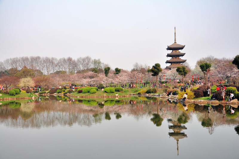Wuhan,Cherry blossom garden royalty free stock photos