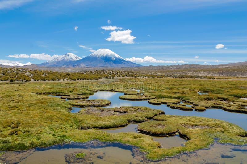 Wulkanu Parinacota śniegu wierzchołek w Chile i Boliwia obrazy royalty free