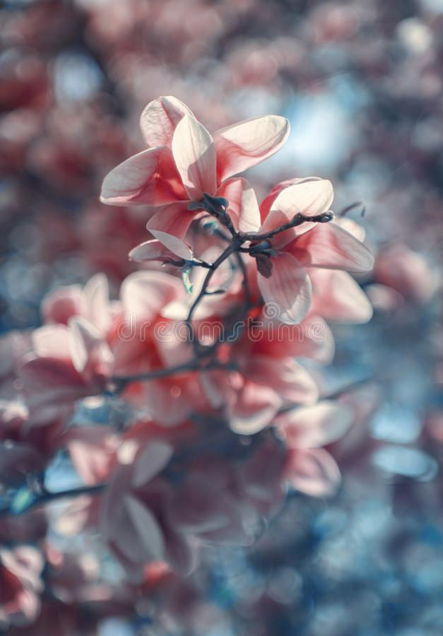 Wunderbar Magnolie lizenzfreies stockbild