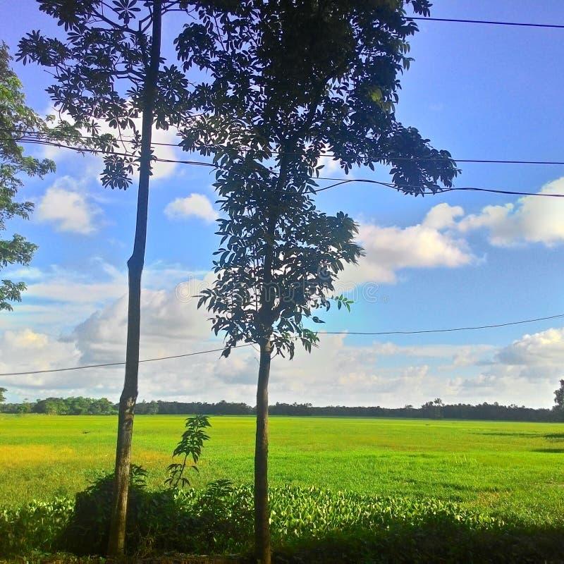 Wunderbare Beschaffenheit von Bangladesch stockbild