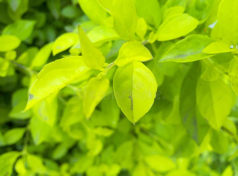 Wunderbare Blätter mit hoher Qualität stockfotos