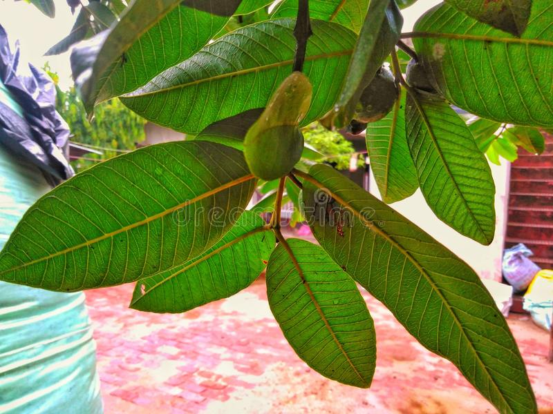 Wunderbare Blätter und rötlicher Hintergrund stockbild