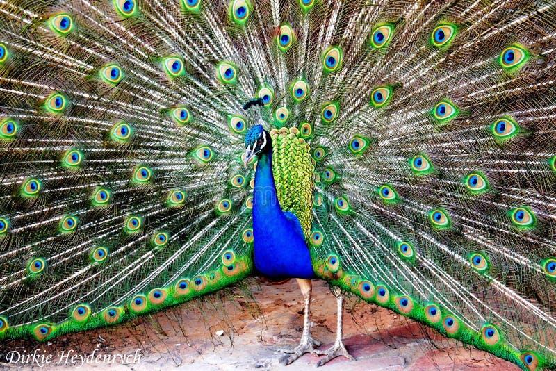 Wunderbare Farben stockfotos
