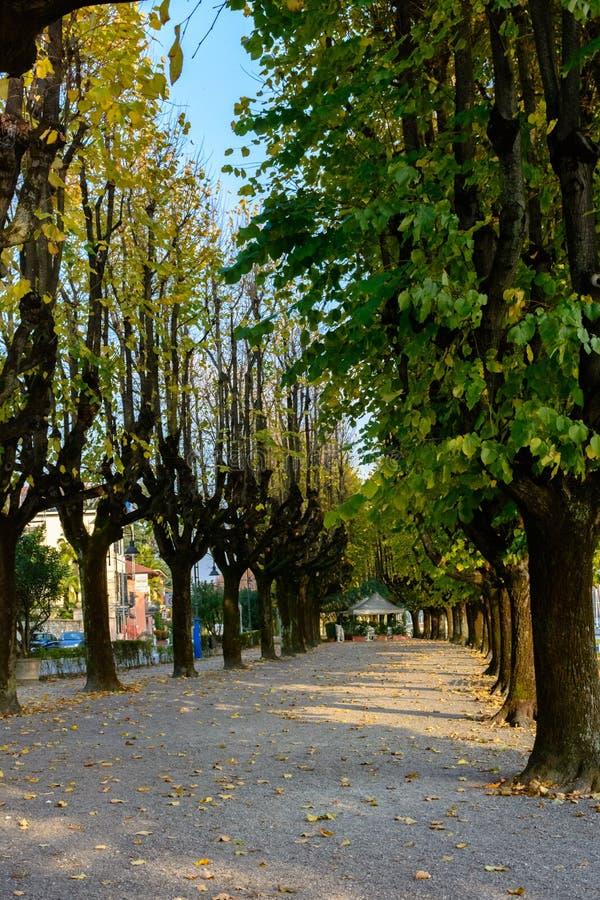 Wunderbare Herbstallee für das Gehen, große Bäume mit gelben Blättern lizenzfreies stockfoto