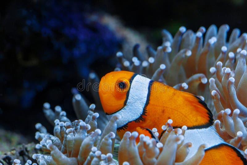 Wunderbare und schöne Unterwasserwelt mit Korallen und tropica lizenzfreies stockbild