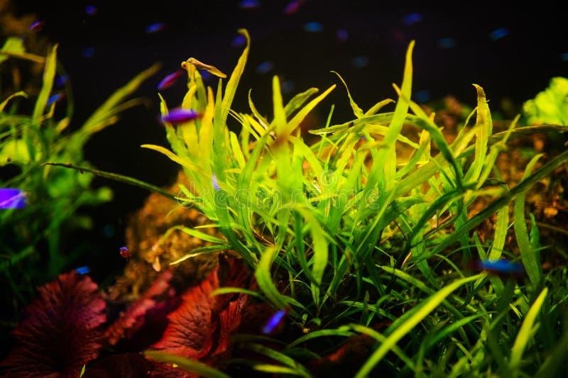 Wunderbare und sch?ne Unterwasserwelt mit Korallen und tropischen Fischen lizenzfreie stockfotografie