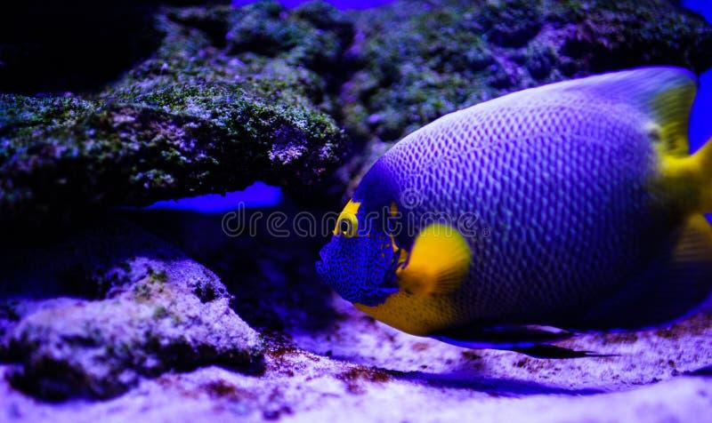 Wunderbare und sch?ne Unterwasserwelt mit Korallen und tropischen Fischen stockfotos