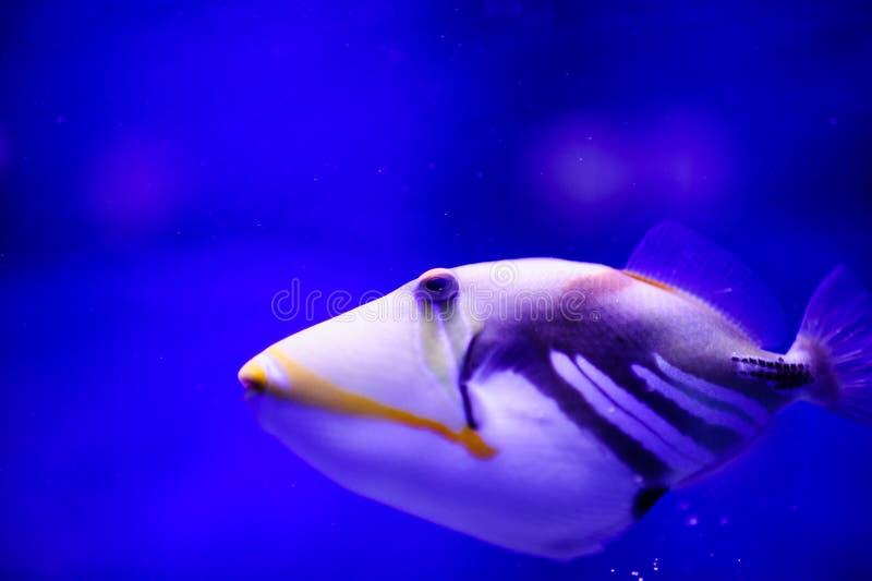 Wunderbare und sch?ne Unterwasserwelt mit Korallen und tropischen Fischen lizenzfreie stockbilder