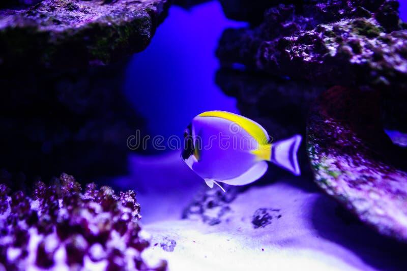 Wunderbare und sch?ne Unterwasserwelt mit Korallen und tropischen Fischen lizenzfreie stockfotos