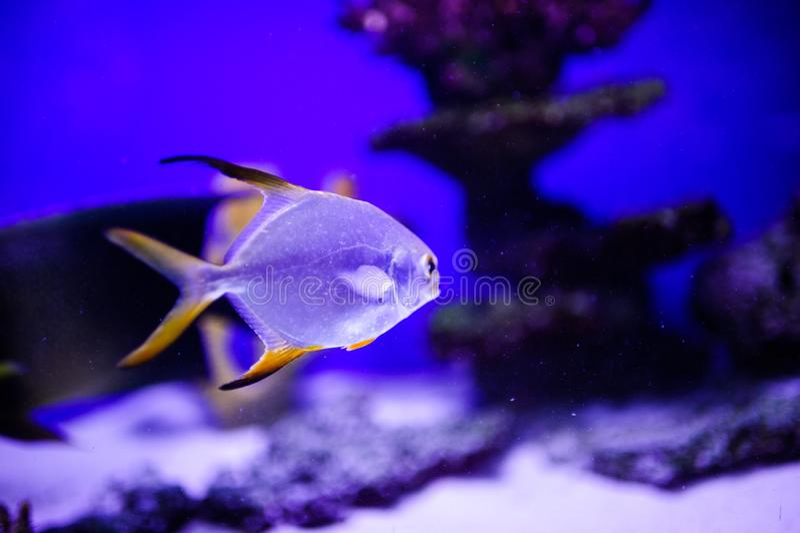 Wunderbare und sch?ne Unterwasserwelt mit Korallen und tropischen Fischen stockbilder