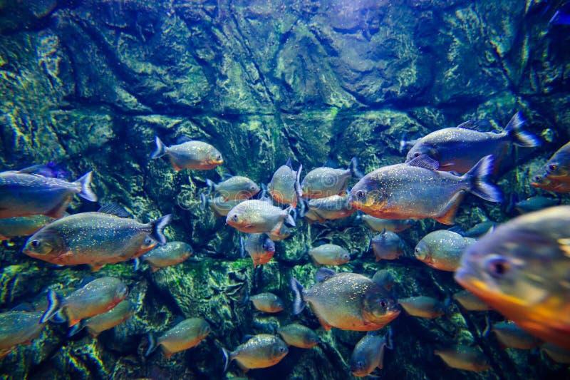 Wunderbare und sch?ne Unterwasserwelt mit Korallen und tropischen Fischen lizenzfreies stockbild