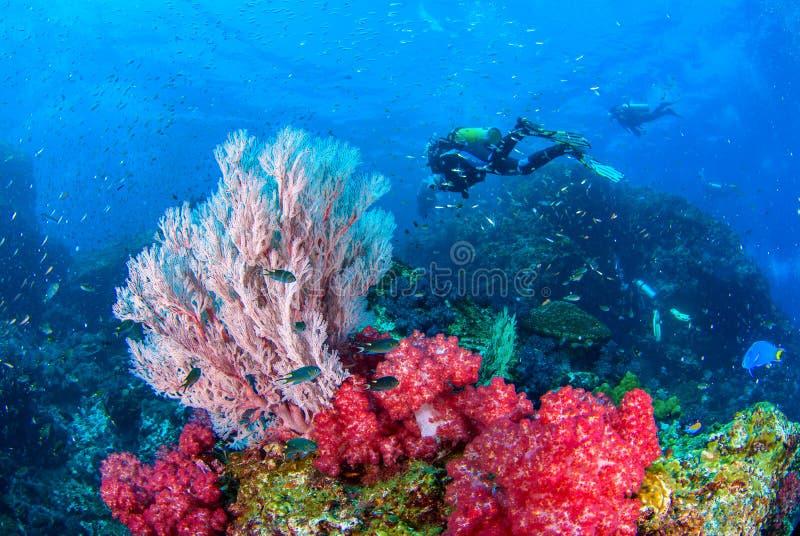 Wunderbare Unterwasser- und vibrierende Farben von Korallen und von Sporttaucherhintergrund lizenzfreie stockfotos