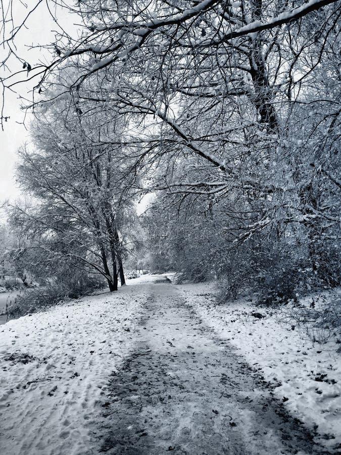 wunderbare weiße Landschaft mit Schnee lizenzfreie stockbilder