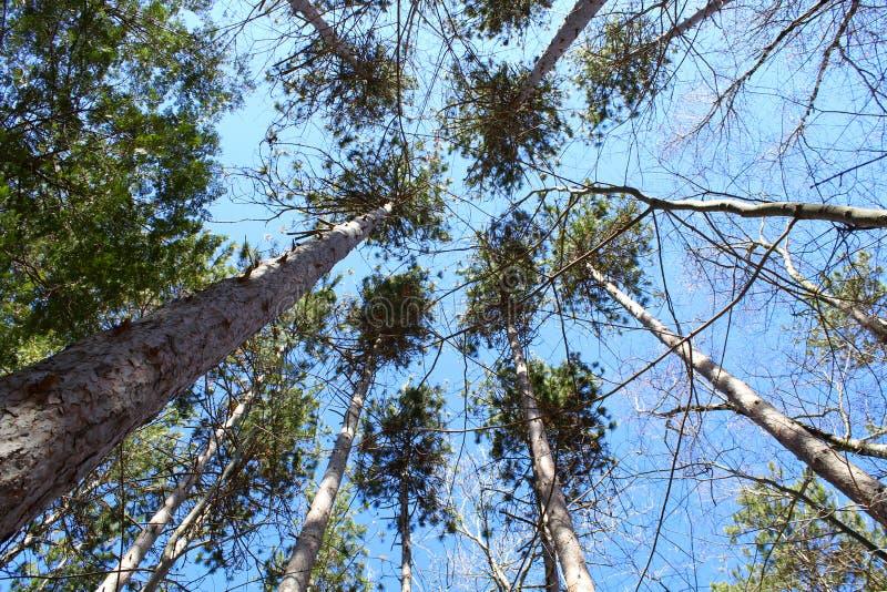 Wunderbarer Baumregenschirm stockfotografie