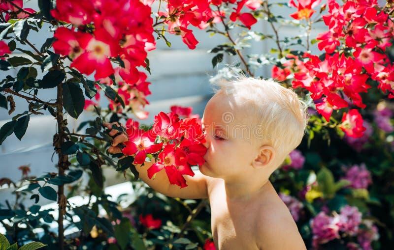 Wunderbarer Geruch Der Tag der Kinder Kleines Baby Sommer Mutter- oder Frauentag Neues Leben-Konzept Frühlingsfeiertag wenig stockbilder