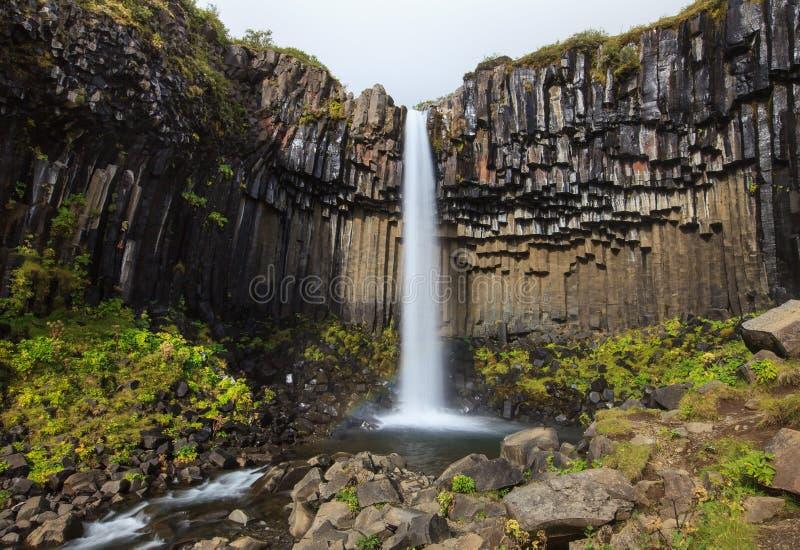 Wunderbarer und hoher Svartifoss-Wasserfall mit schwarzen Basalts?ulen auf S?d-Island, Sommerzeit lizenzfreie stockbilder