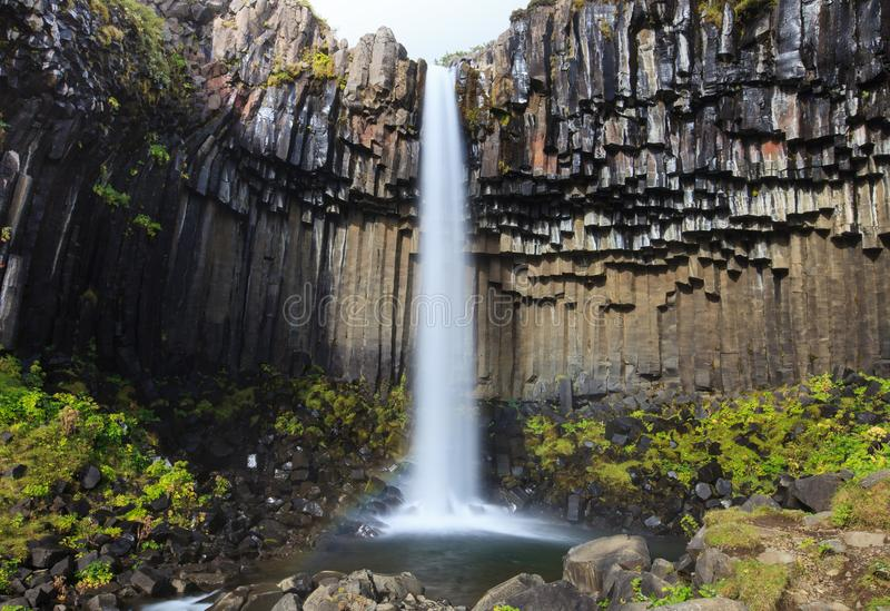 Wunderbarer und hoher Svartifoss-Wasserfall mit schwarzen Basalts?ulen auf S?d-Island, Sommerzeit lizenzfreies stockbild