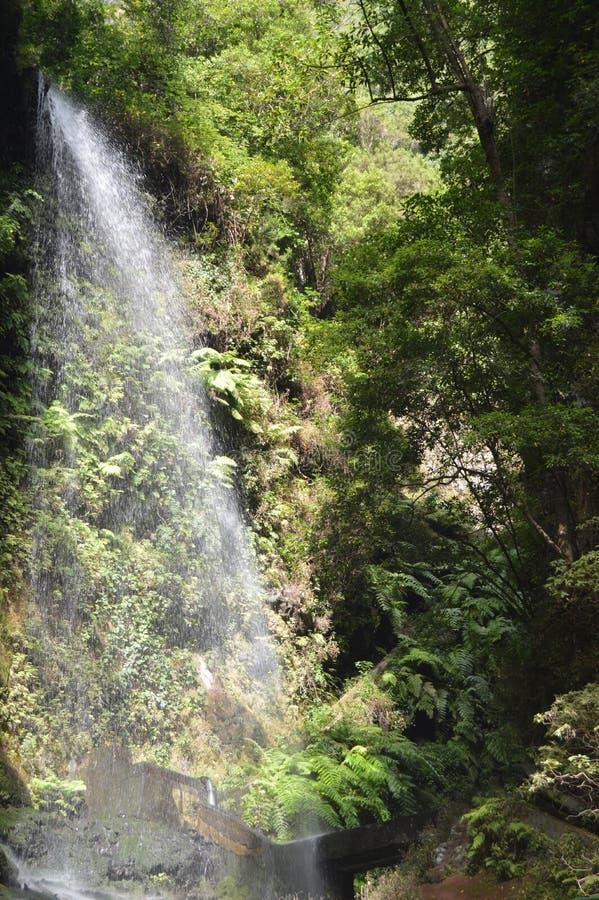 Wunderbarer Wasserfall in Forest Of Los Tilos On die Insel von La Palma Reise, Natur, Feiertage, Geologie 8. Juli 2015 Isla De stockbild
