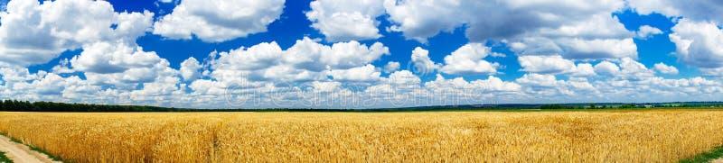 Wunderbares goldenes Weizenfeld im Sommer stockfotos