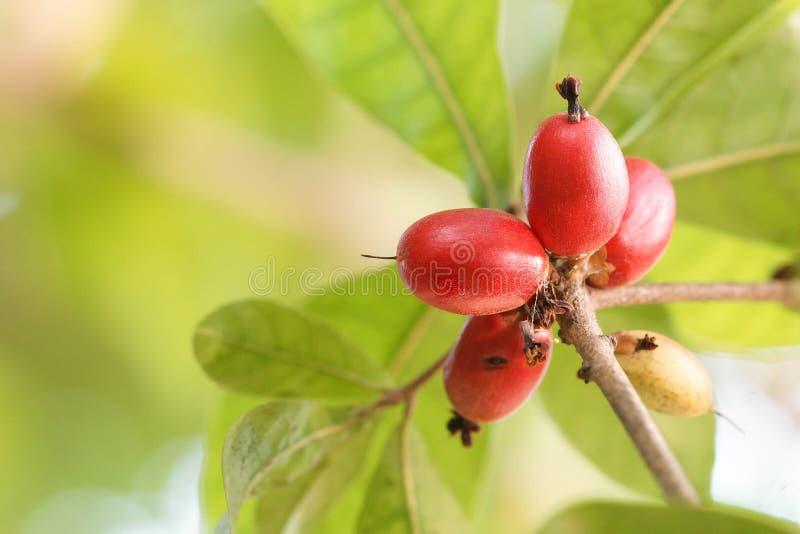 Wunderfrucht stockbilder