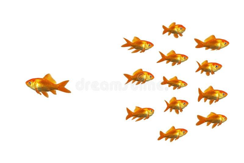 Wundernder Goldfish lizenzfreies stockbild