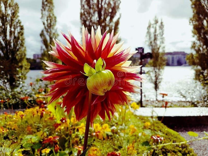 Wundervolle Blume stockfotos