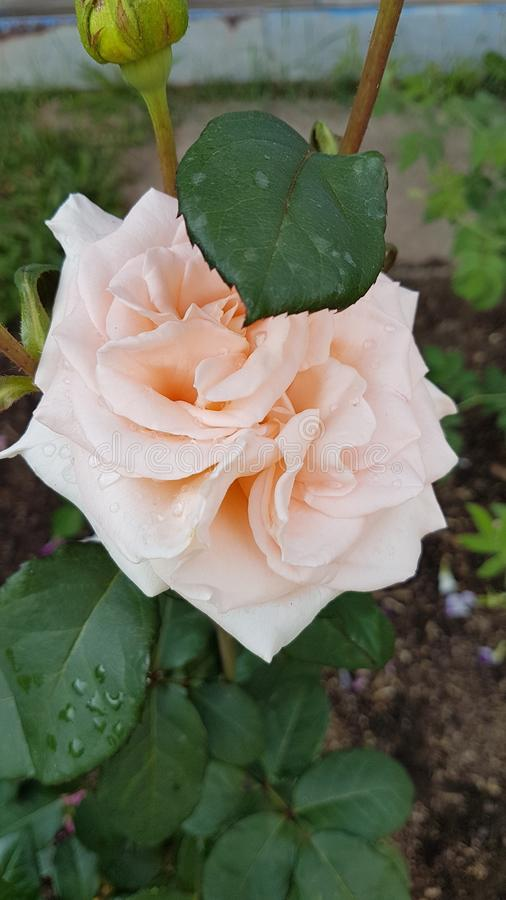 Wundervolle Blume stockfoto