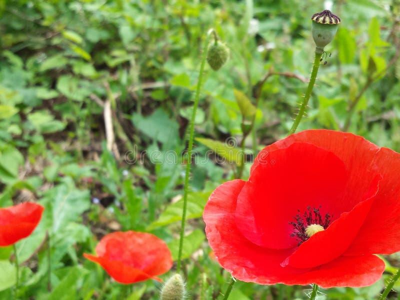Wundervolle Blumen stockfoto