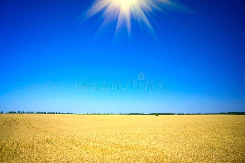 Wundervolle Sommerlandschaft. stockbilder