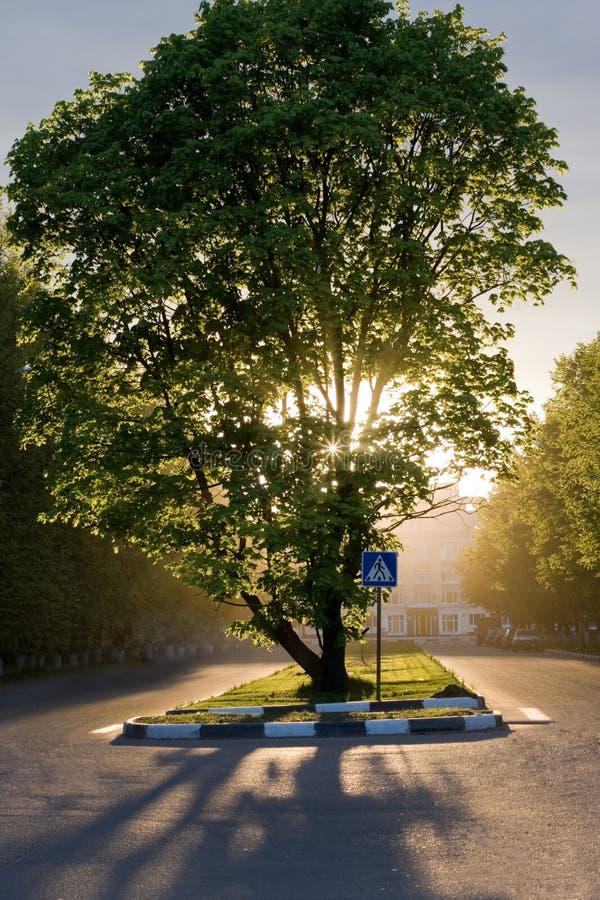 Wundervoller Baum mit Sonnenuntergang