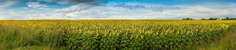 Wundervolles Feld der panoramischen Ansicht der Sonnenblumen lizenzfreie stockfotos