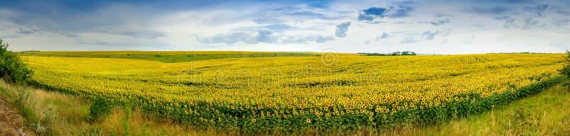 Wundervolles Feld der panoramischen Ansicht der Sonnenblumen lizenzfreie stockfotografie