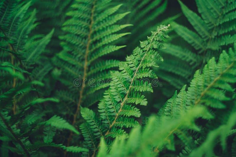 Wurmfarnanlage im Wald lizenzfreie stockfotografie