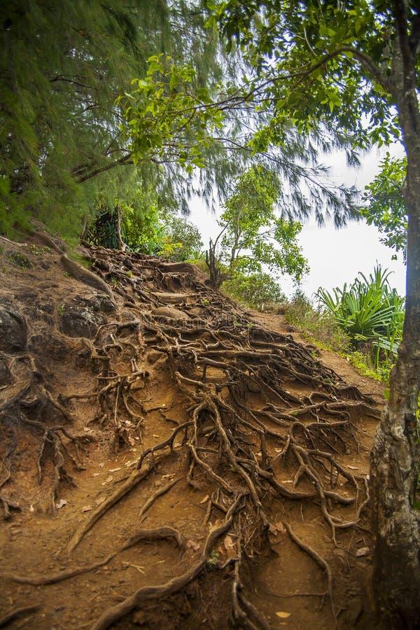 Wurzeln auf tropischem Bergabhang stockbild