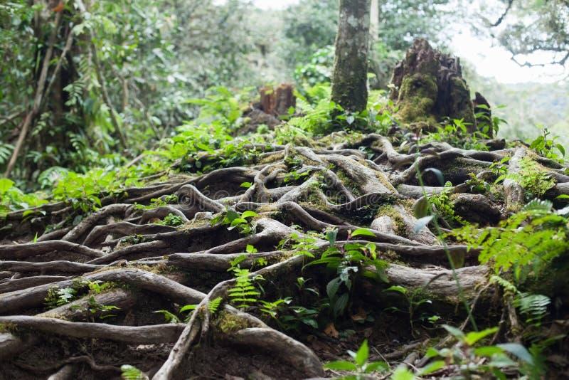 Wurzeln des Baums lizenzfreie stockfotos