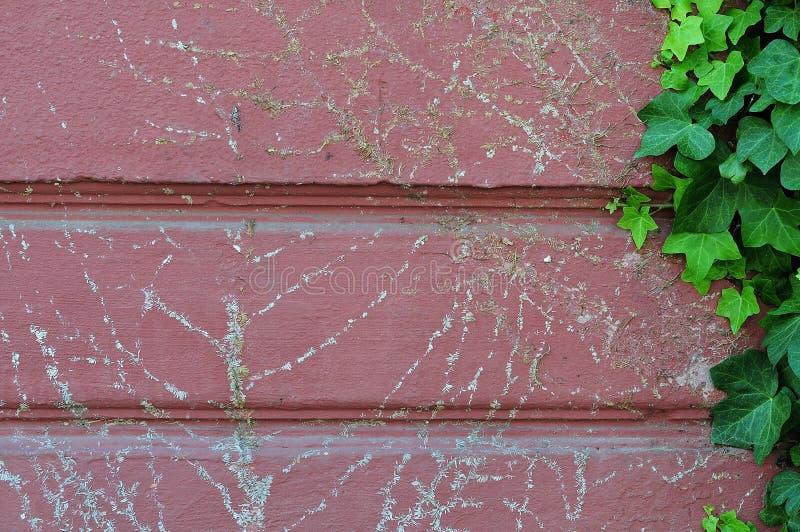 Wurzeln des entfernten Efeus auf einer Fassade stockfoto