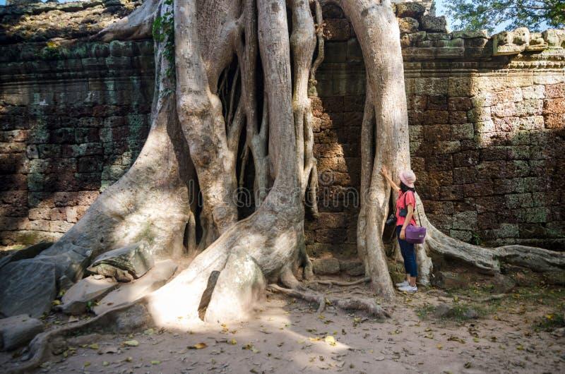 Wurzeln eines spung auf einem Tempel in Ta Prohm lizenzfreie stockfotos
