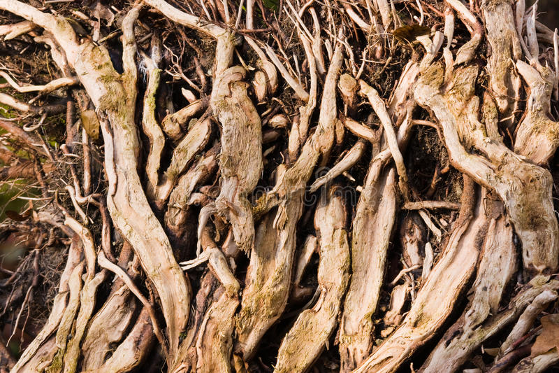 Wurzeln im Wald lizenzfreie stockbilder