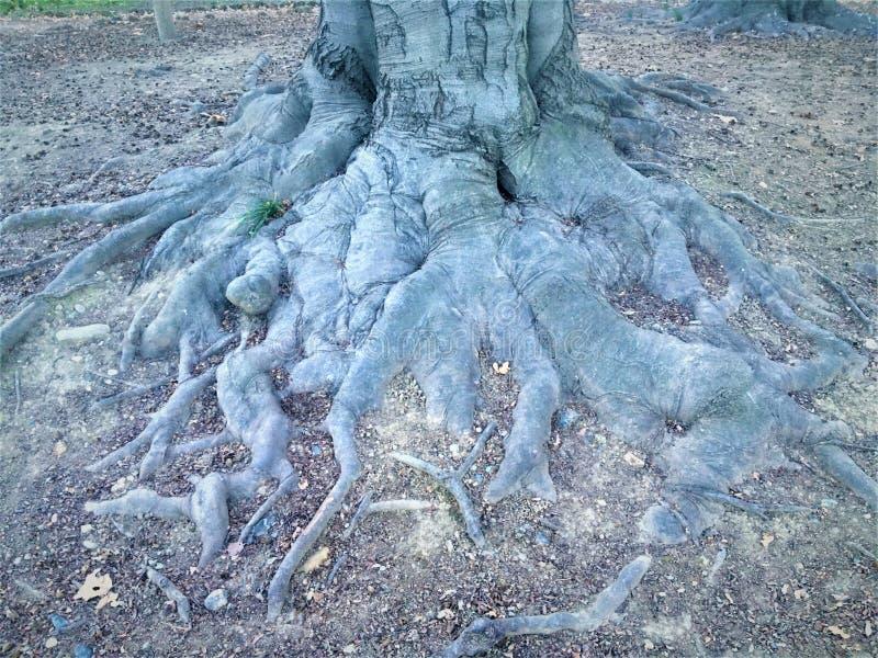 Wurzeln und Natur, Ursprung und Anziehungskraft stockbild