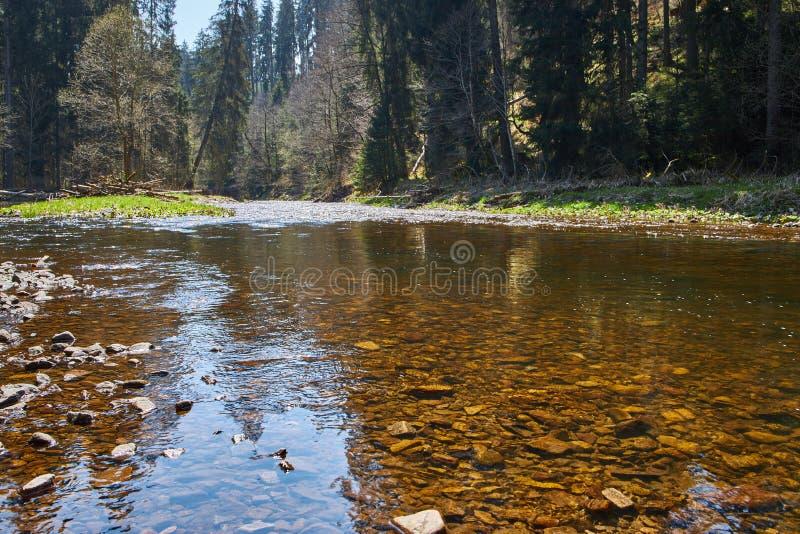 Wutach do rio com as árvores que refletem na água pouco profunda na Floresta Negra em Alemanha fotografia de stock