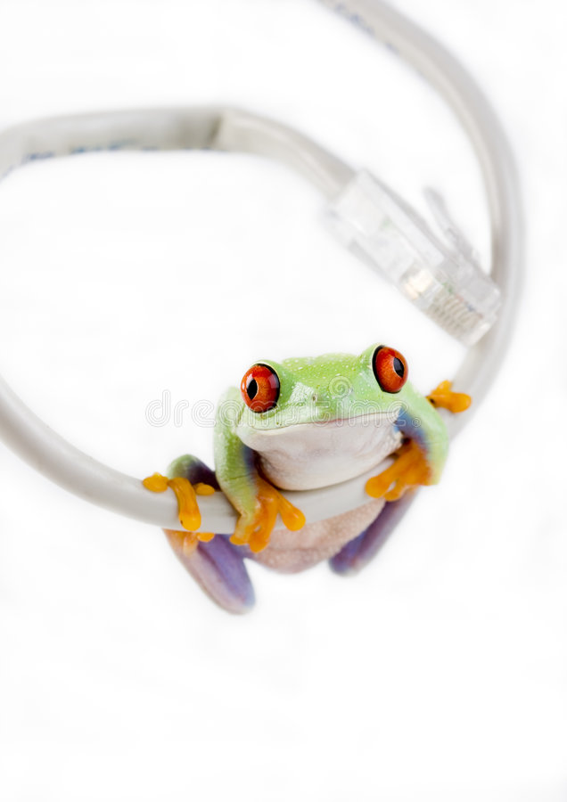WWW Frog royalty free stock photography