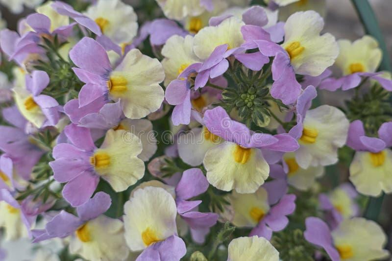 Wyżliny w kwiacie zdjęcia stock
