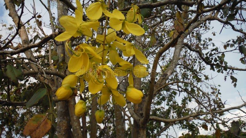 Wyłącznie naturalny, wyłącznie kolor żółty wszystko od kinakon zdjęcia royalty free