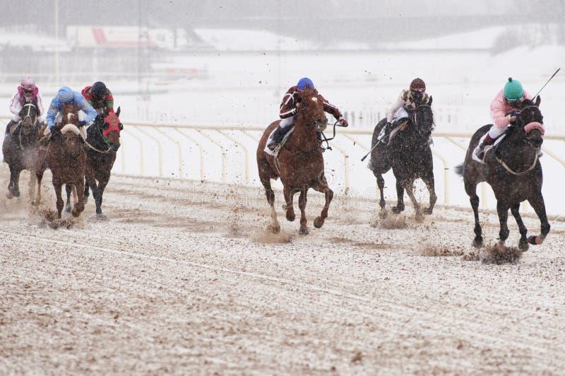 wyścigi konne zima obrazy royalty free