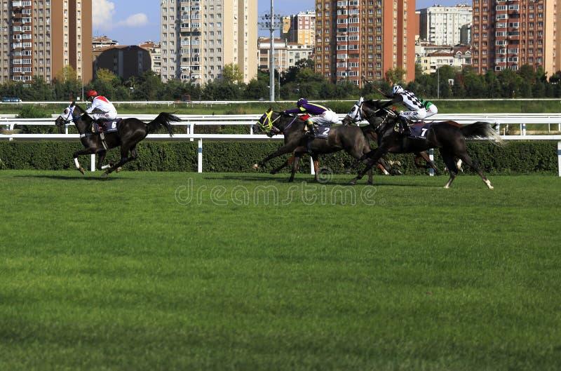 Wyścigi konny zdjęcie stock