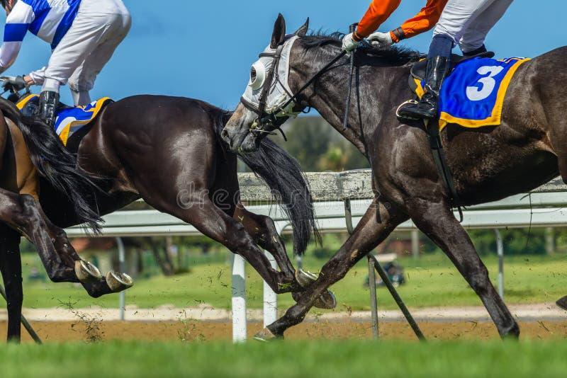 Wyścigi Konny akci nóg głowy zdjęcia stock